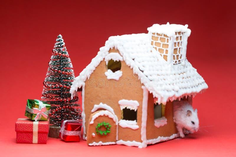 在他的曲奇饼房子附近的逗人喜爱的仓鼠发现了礼物圣诞树 库存图片