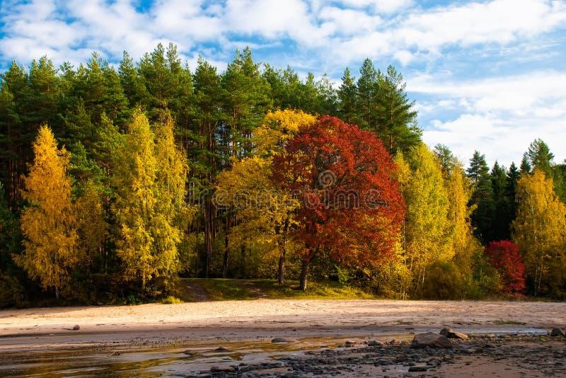 在伊戈尔小河附近的森林 免版税库存图片