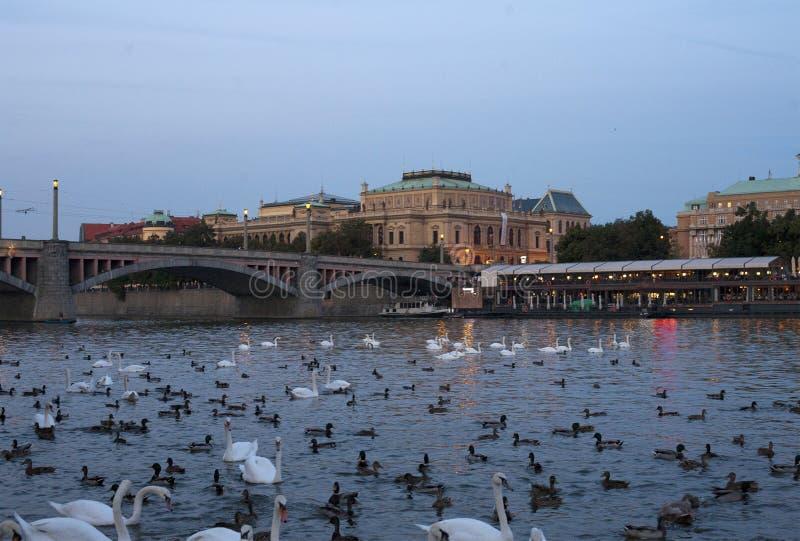 在伏尔塔瓦河河附近的餐馆 免版税库存图片