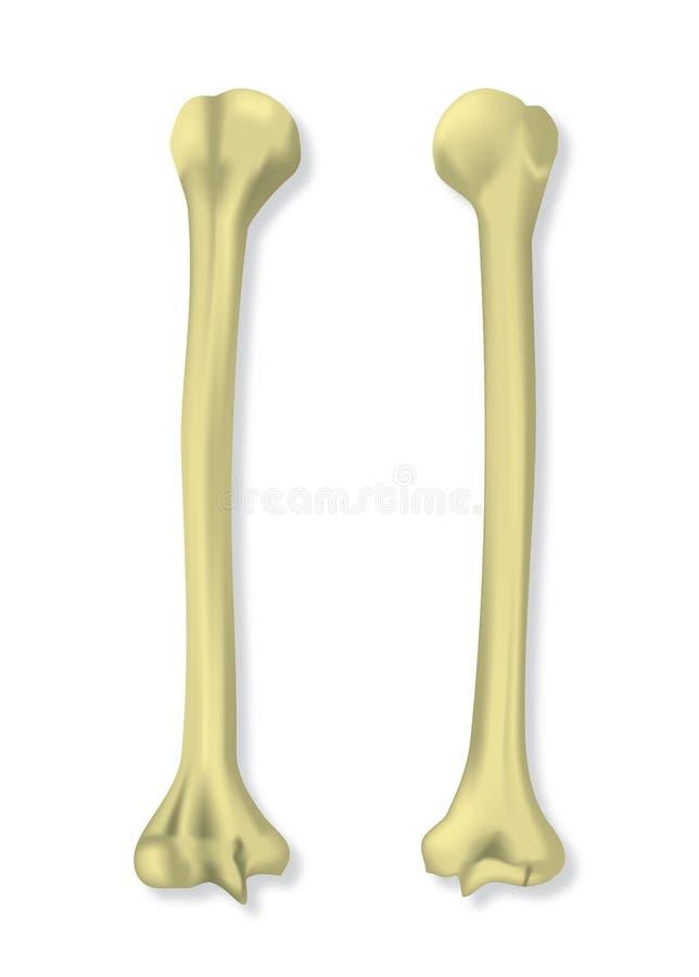 在传染媒介例证的人的手骨头 库存例证