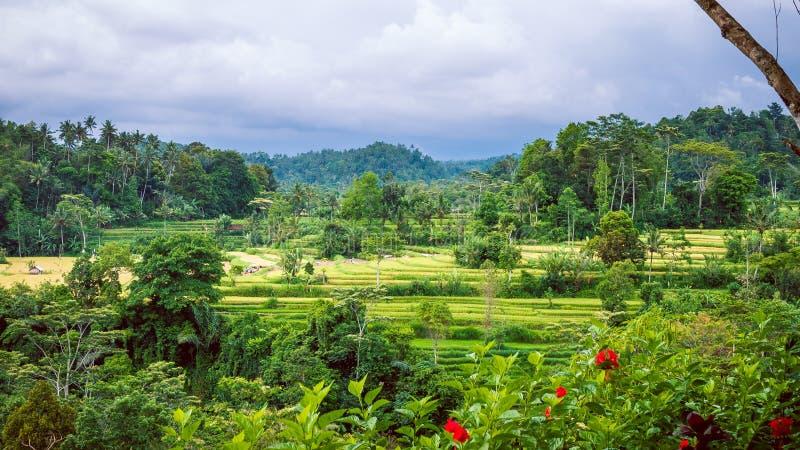 在伴奏者的米tarraces,多雨云彩调低,巴厘岛,印度尼西亚 免版税库存图片