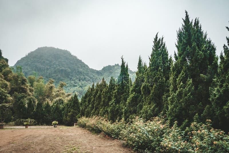 在低云彩的树木丛生的山坡与在薄雾覆盖的常青针叶树  免版税库存照片