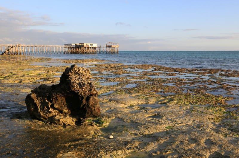 在低潮以后的海洋岸 库存照片
