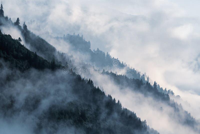 在低谷雾的树木丛生的山坡与在薄雾覆盖的常青针叶树剪影  图库摄影