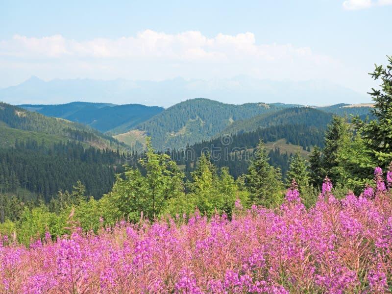 在低Tatras的风景 免版税库存图片
