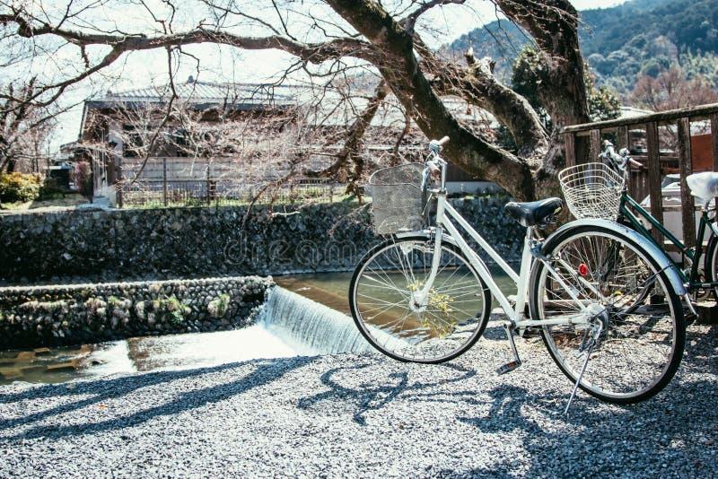 在佐仓下的白色自行车公园开花靠近河在arashiyama,京都日本 在Hanami,欢乐的樱花 库存图片
