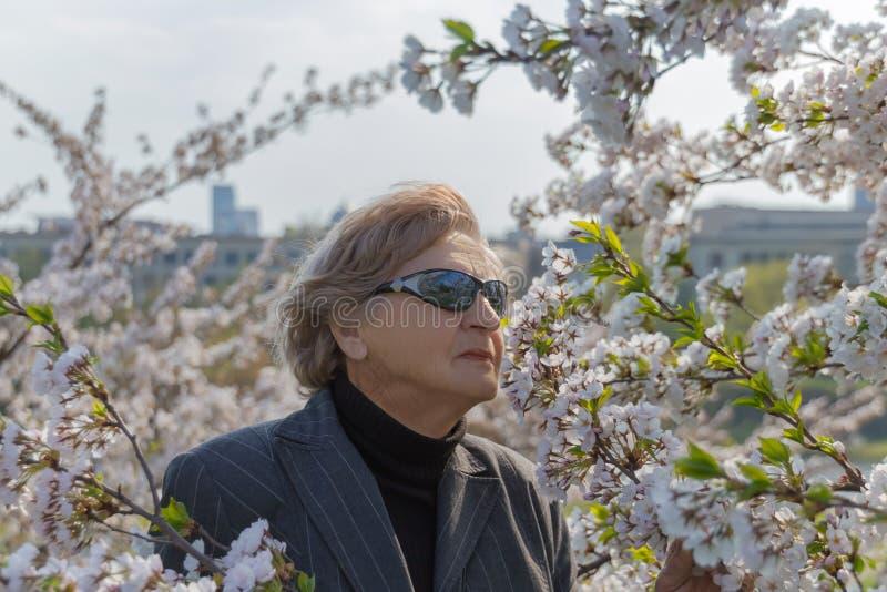 在佐仓春天开花或樱桃树花之间的资深妇女 愉快的资深妇女概念 免版税库存图片