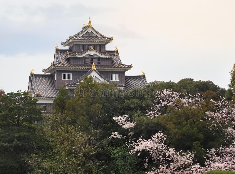 在佐仓绽放季节期间,冈山城堡乌鸦熔铸了 免版税库存图片