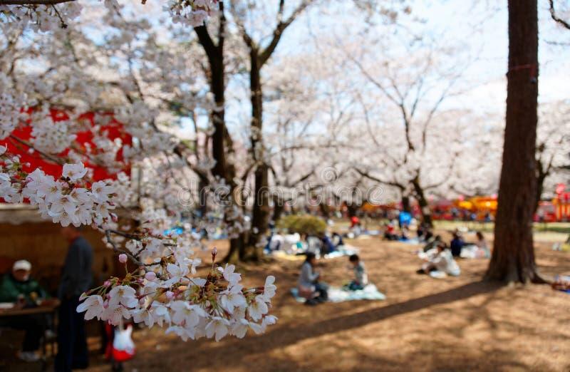 在佐仓Hanami,普遍的娱乐活动在春天,人们有在象草的地面上的一顿野餐 免版税图库摄影