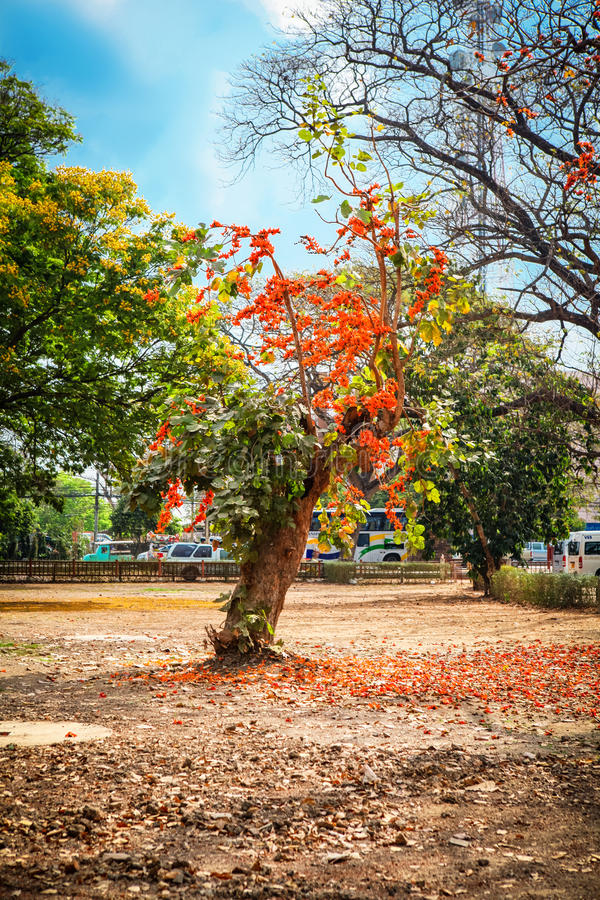 在佛教寺庙复合体的Wat Mahathat在曼谷附近的阿尤特拉利夫雷斯 泰国 库存照片