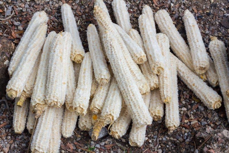 在作为木炭使用的地面上的许多玉米棒子为做campfir 免版税库存照片