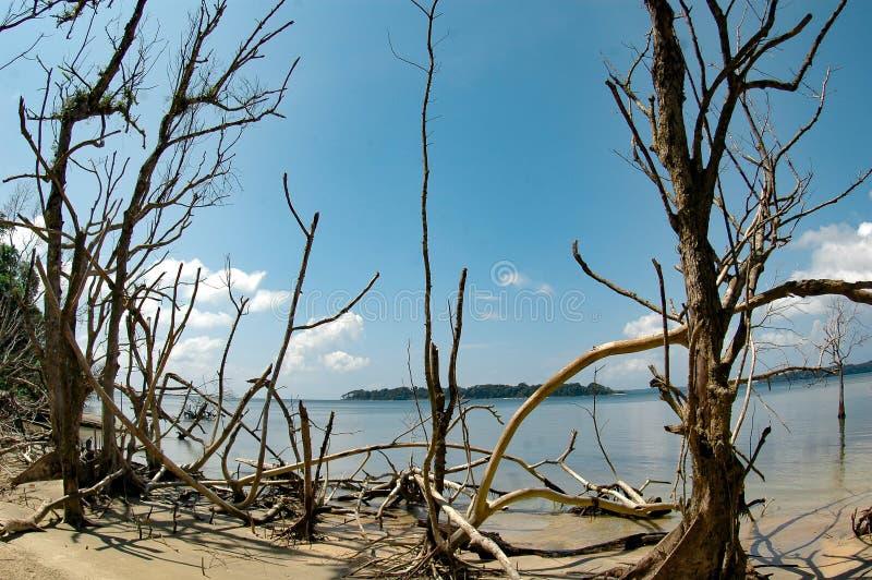 在作用以后的海啸 免版税图库摄影
