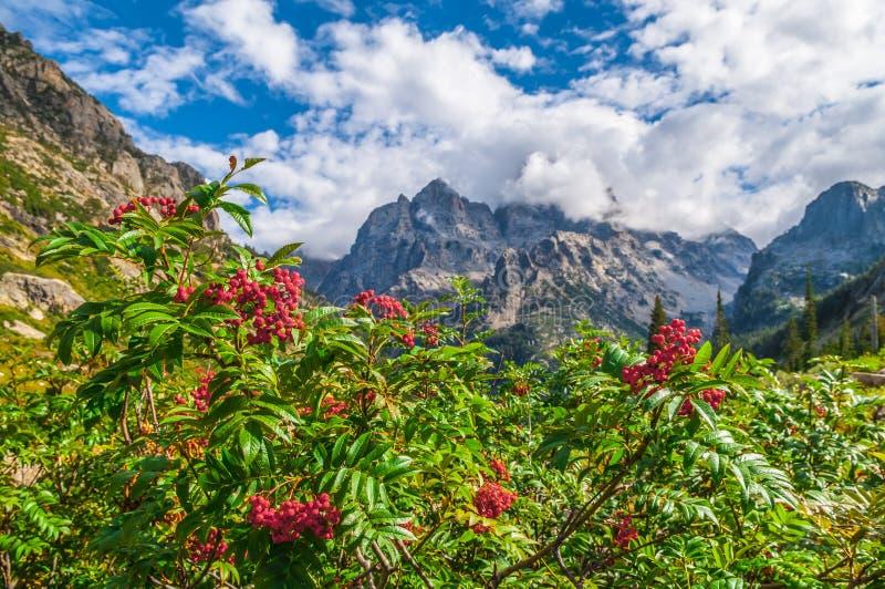 在供徒步旅行的小道的山脉灰在小瀑布峡谷-盛大T 免版税库存图片