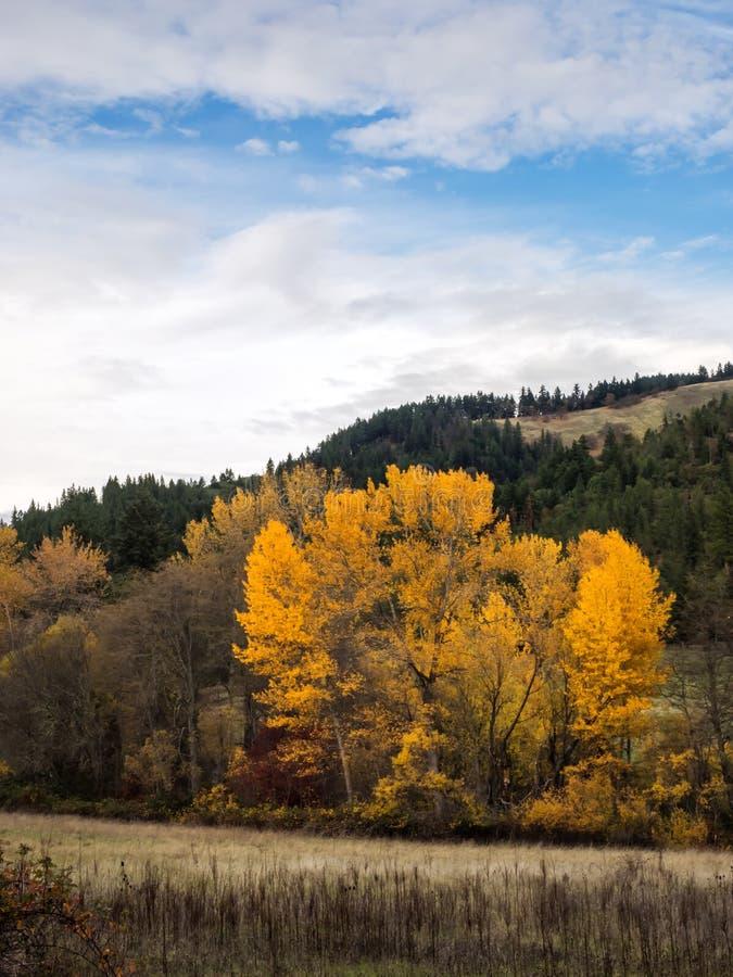 在俄勒冈的小山的秋天颜色 免版税库存图片
