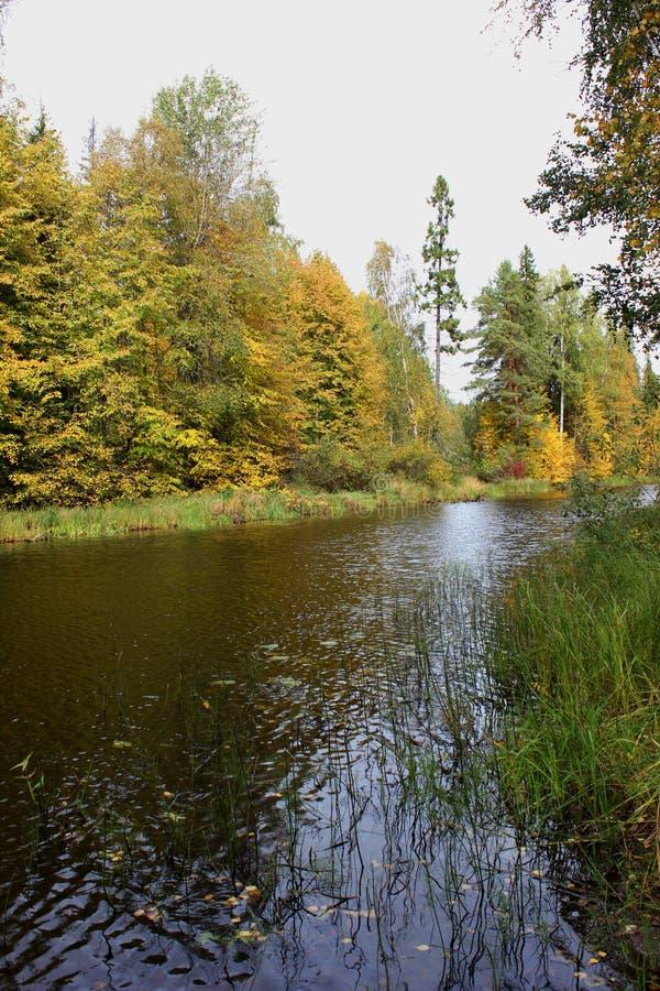 在俄国省的秋天天 免版税库存图片