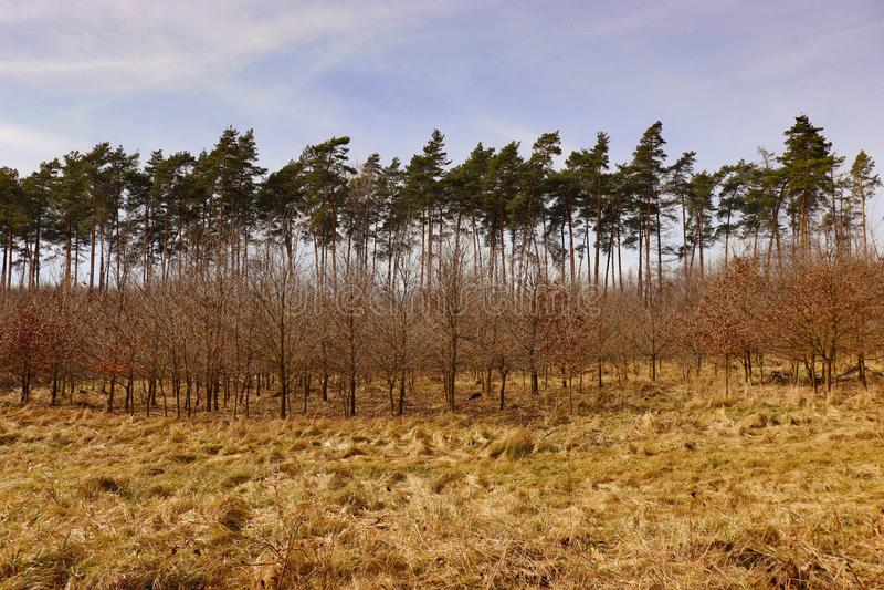在俄斯拉发,捷克附近的被混合的狂放的树森林 库存图片