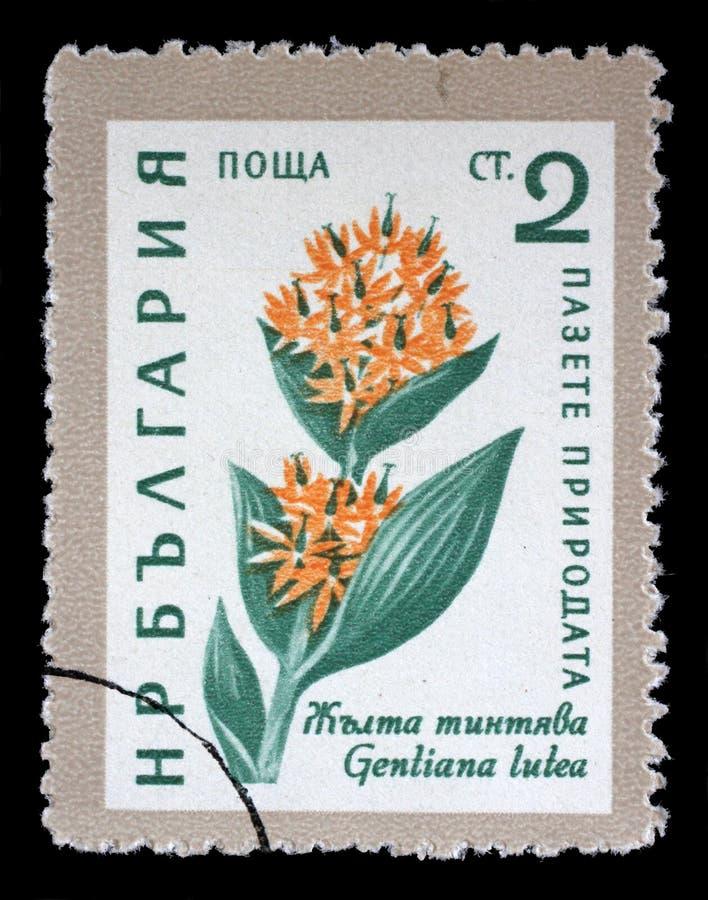 在保加利亚打印的邮票显示Gentiana lutea花 库存照片