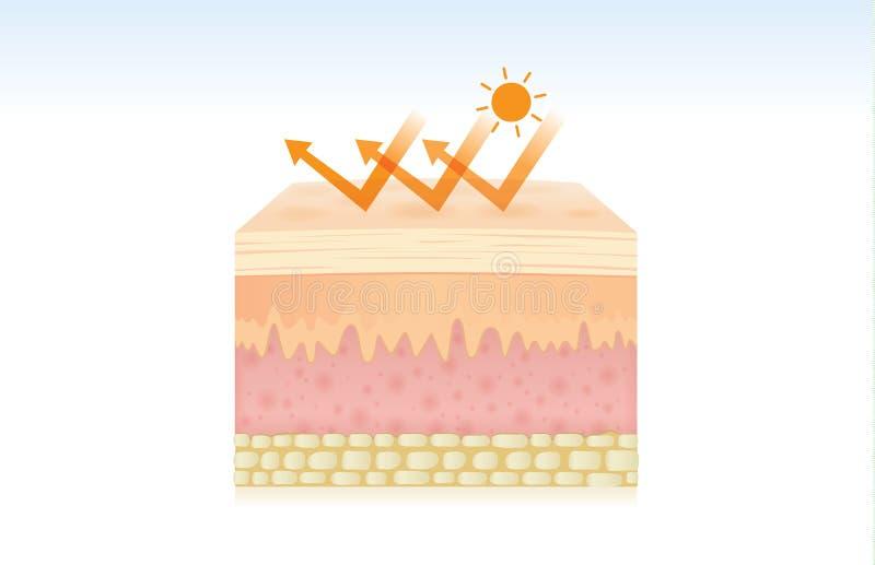 在保护以后的紫外反射皮肤 库存例证