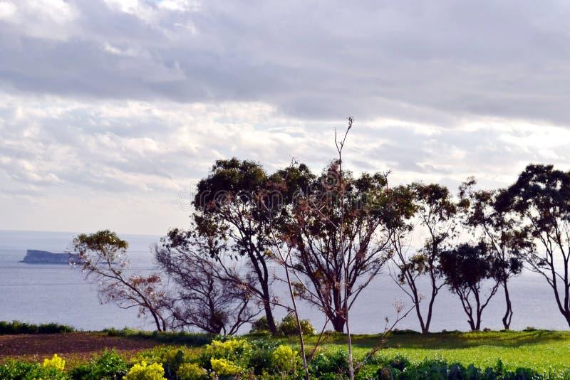 在俯视海和一个小海岛的峭壁的树 免版税库存图片