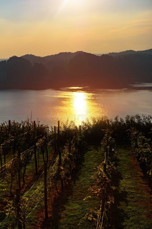 在俯视湖的葡萄园的美好的日落 免版税库存照片