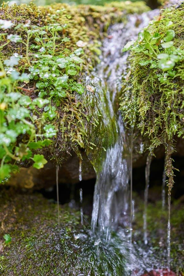 在倾斜下的小山射流在草和青苔 库存图片