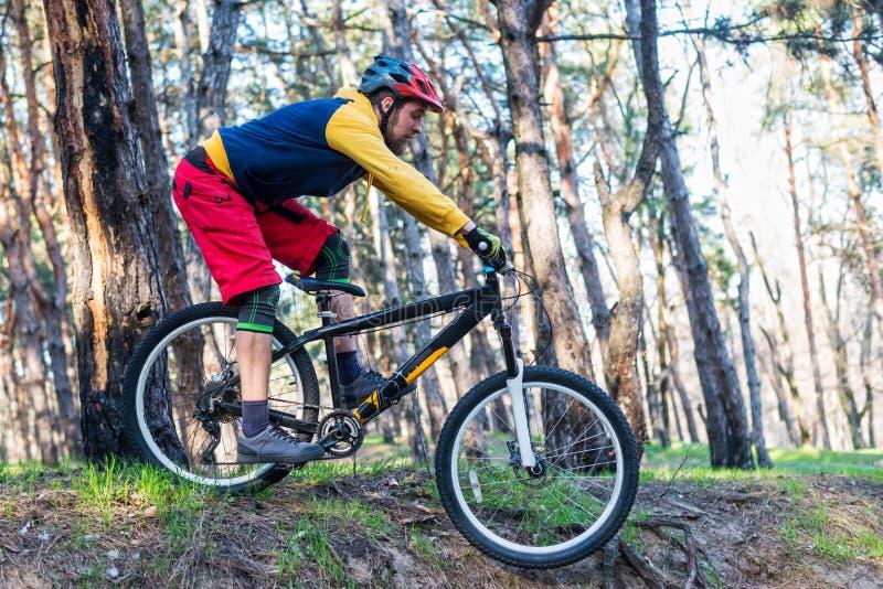 在倾斜下的登山车骑自行车者,循环通过森林 有效的生活方式 库存图片