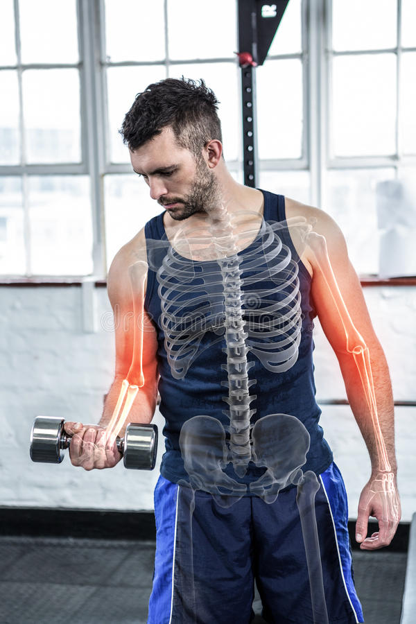 在健身房的大力士举的重量的被突出的骨头 库存照片