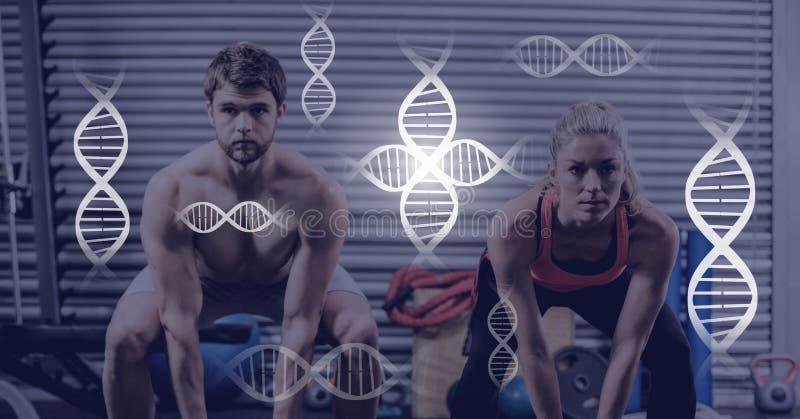 在健身房的运动适合夫妇与基因生物连接 免版税图库摄影