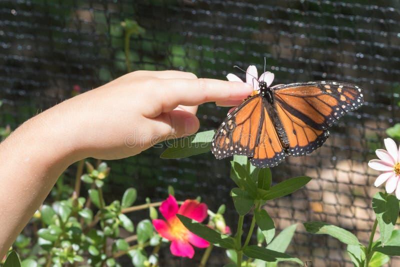 在儿童` s手上的蝴蝶着陆 免版税库存照片