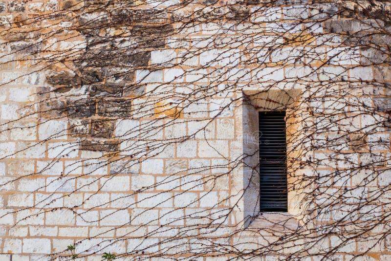 在充分一个石墙的窗口常春藤 图库摄影