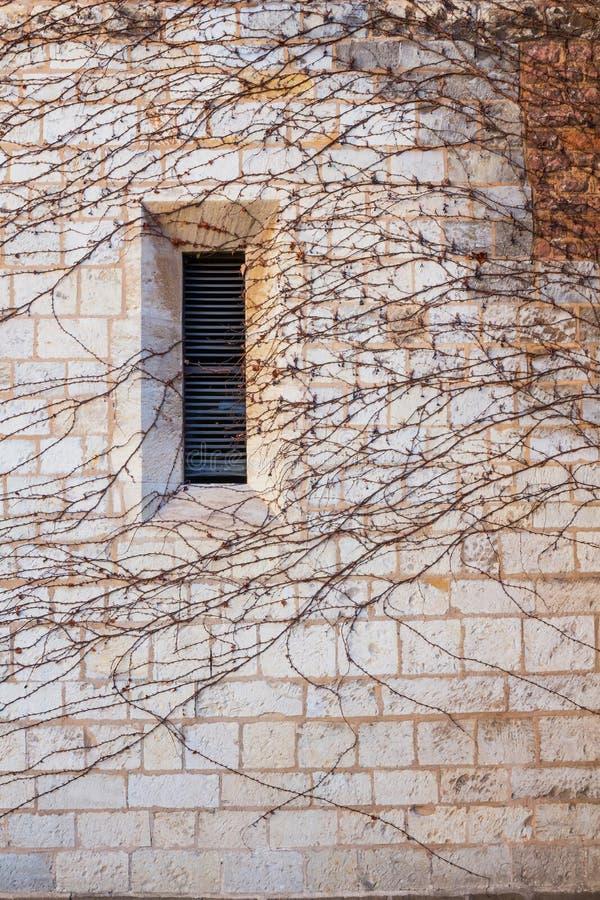 在充分一个石墙的窗口常春藤 免版税图库摄影