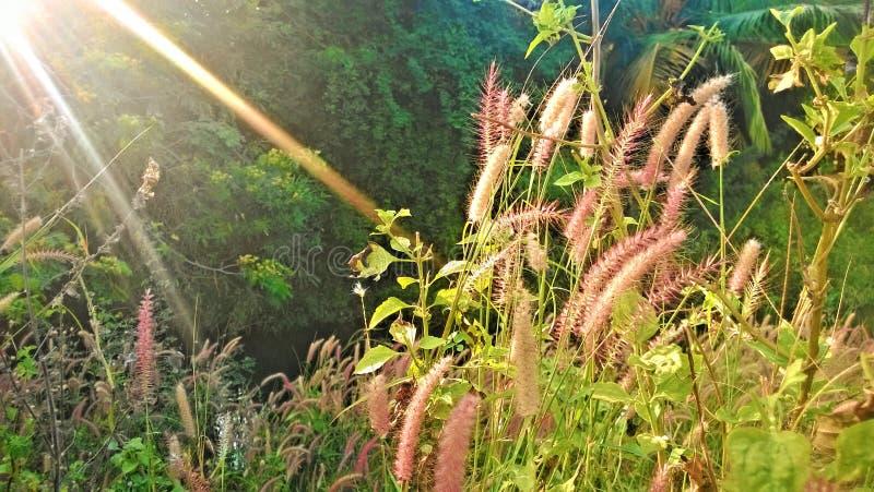 在充分的光的自然 免版税图库摄影