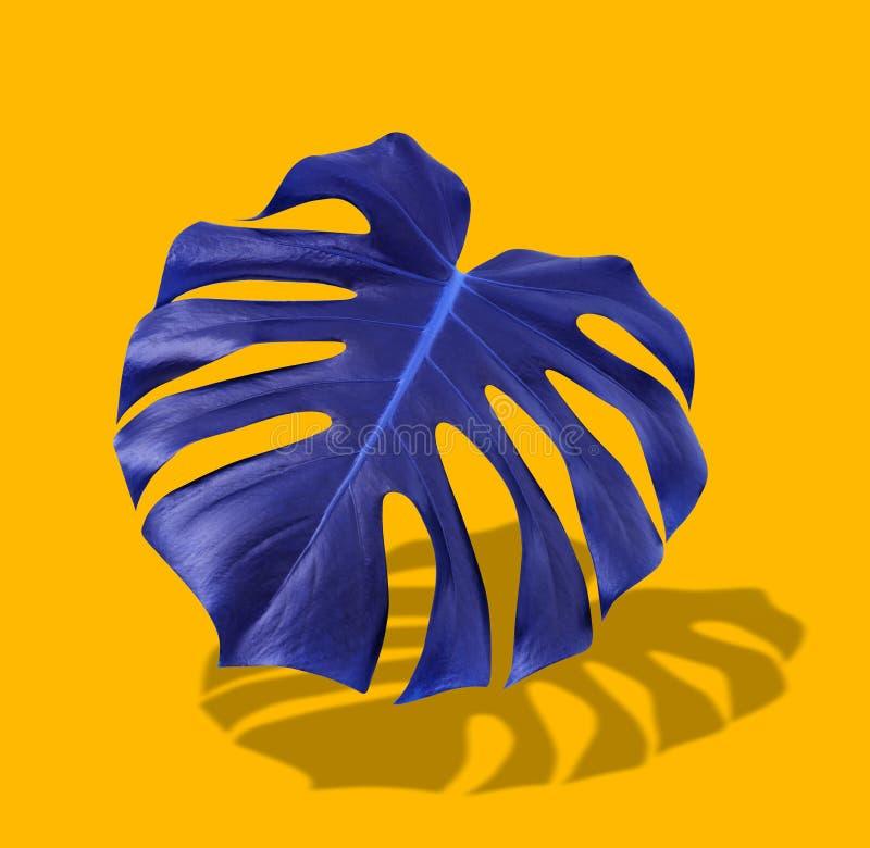 在充满活力的大胆的颜色的创造性的五颜六色的紫色热带叶子monstera在橙色背景 概念艺术 最小超现实 免版税库存照片