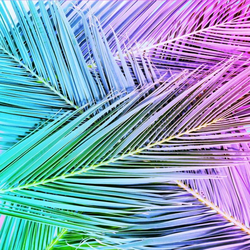 在充满活力的梯度氖颜色的热带棕榈叶 库存照片