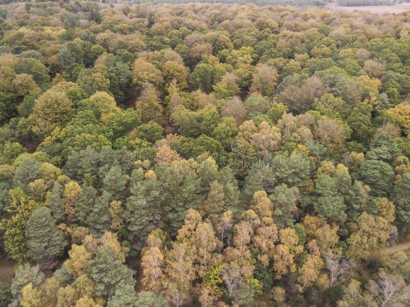 在充满活力的森林森林地期间的秋天秋天的美好的概略的看法寄生虫风景图象 库存图片