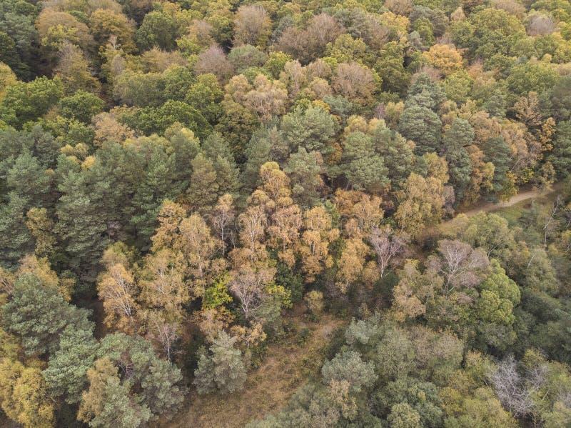 在充满活力的森林森林地期间的秋天秋天的美好的概略的看法寄生虫风景图象 免版税库存照片