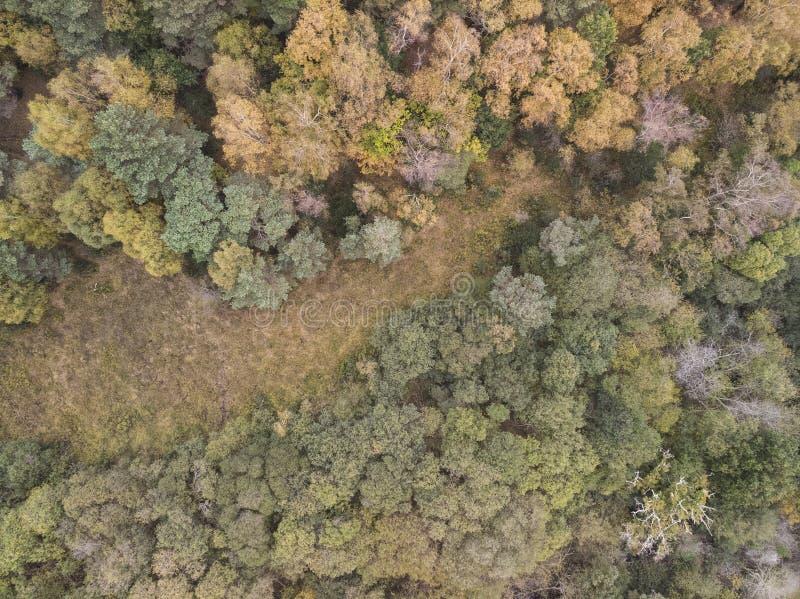 在充满活力的森林森林地期间的秋天秋天的美好的概略的看法寄生虫风景图象 图库摄影