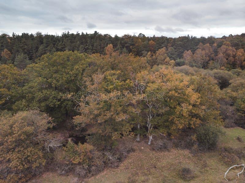 在充满活力的森林森林地期间的秋天秋天的美好的概略的看法寄生虫风景图象 库存照片