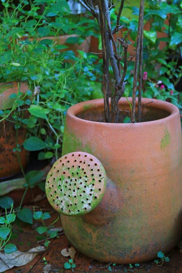 在充满活力的绿色叶子中的喷壶形状的赤土陶器大农场主 免版税库存照片