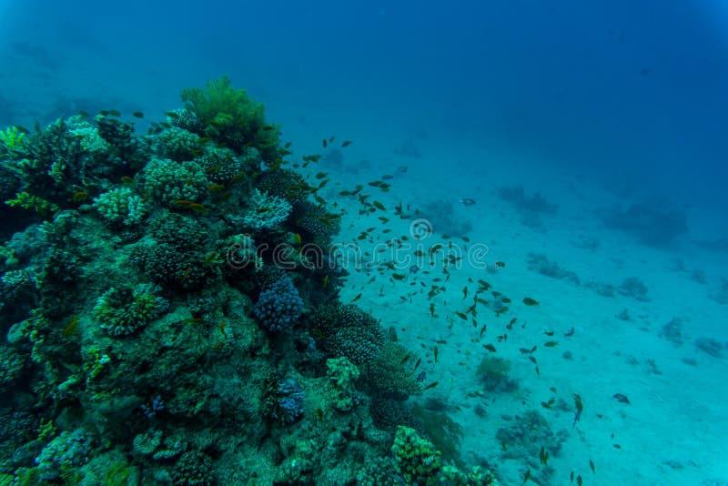 在充满活力的珊瑚礁,水下的场面的热带鱼 图库摄影