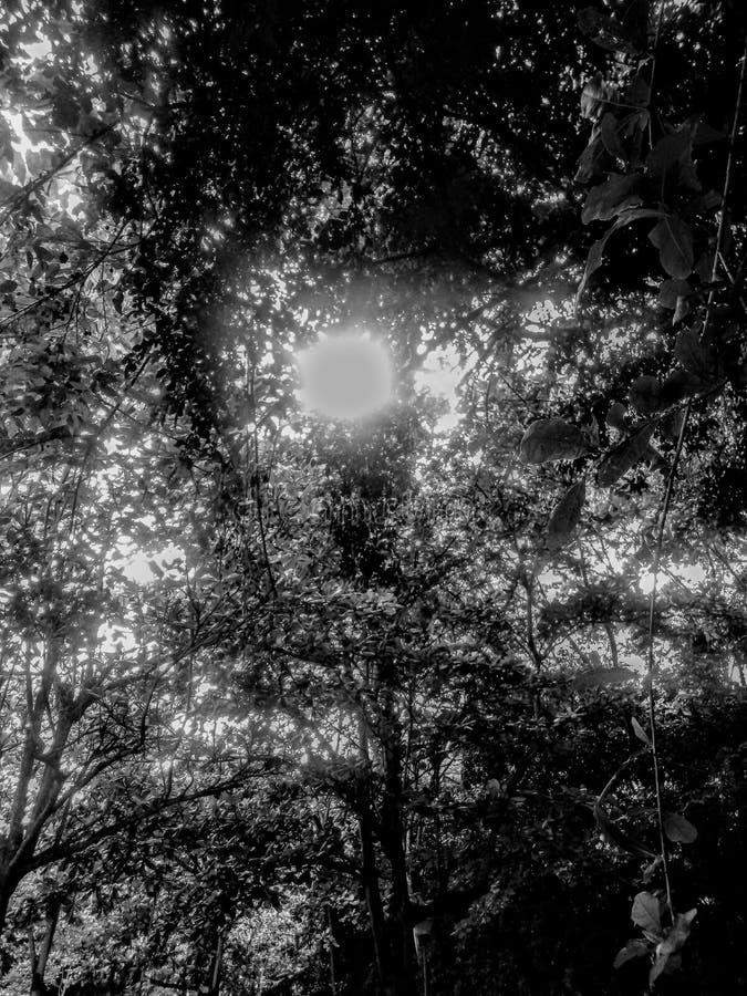 在光和深色的Natura 库存照片