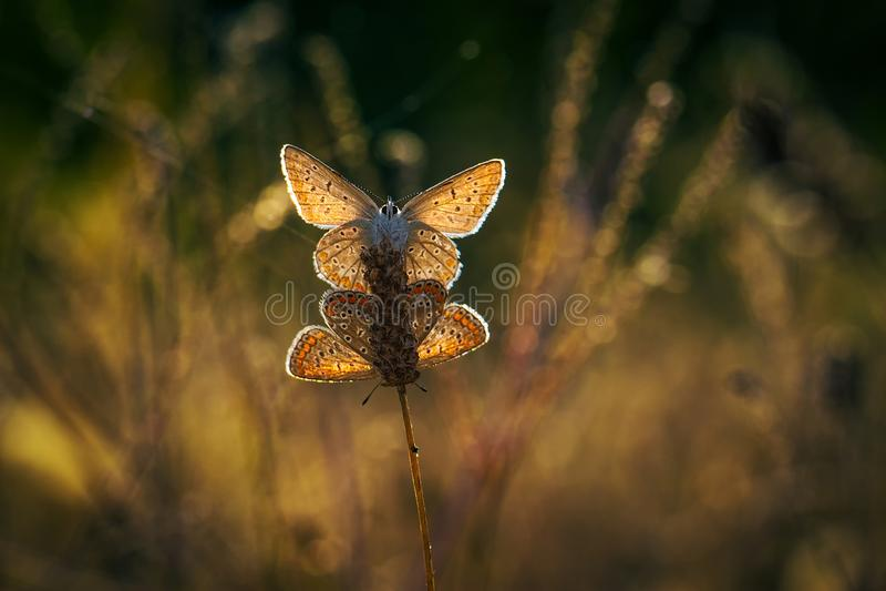在光的蝴蝶 免版税库存照片