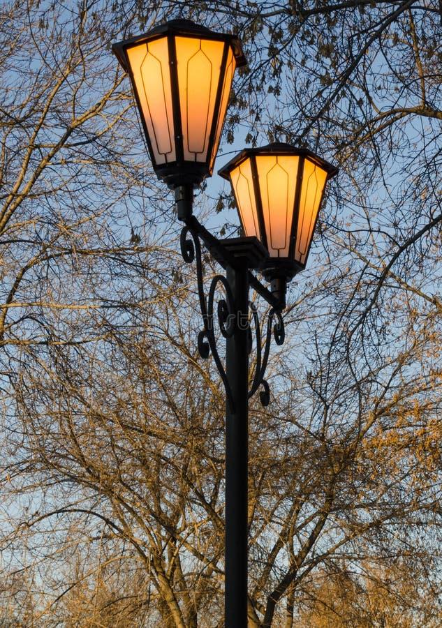在光秃的分支背景的街灯  免版税库存图片
