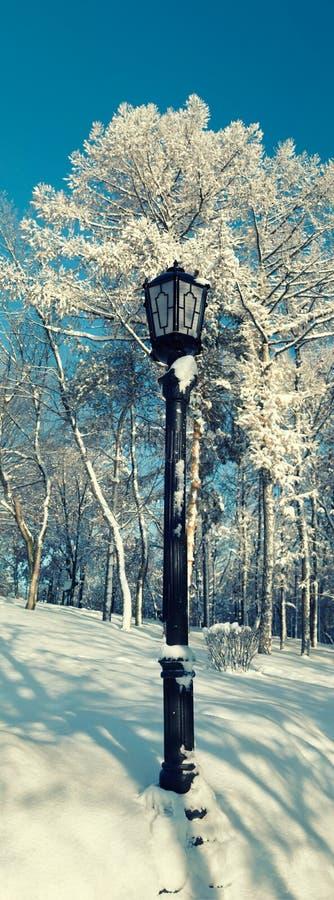 在光秃的树背景的路灯柱在倾斜的 库存图片