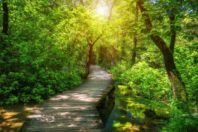 在克尔卡国家公园,克罗地亚,欧洲深绿森林五颜六色的夏天场面的克尔卡河国立公园木路  木 免版税库存照片