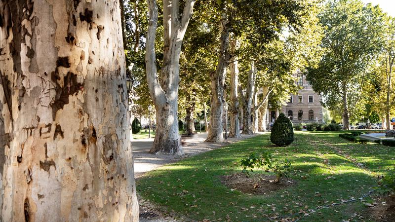 在克罗地亚科学院的平安的公园和艺术前面在萨格勒布 免版税库存照片