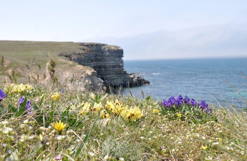 在克里米亚半岛海岸的岩石岸 免版税图库摄影