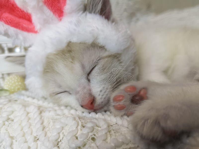在兔宝宝耳朵的猫 在兔子服装逗人喜爱睡觉的动物 免版税图库摄影