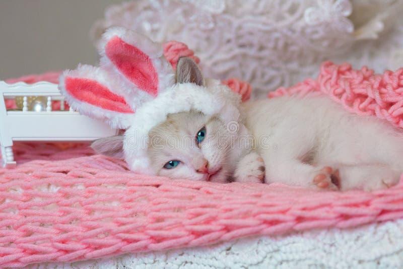 在兔宝宝耳朵的美丽的小猫 在兔子服装的猫 逗人喜爱的宠物 免版税库存照片