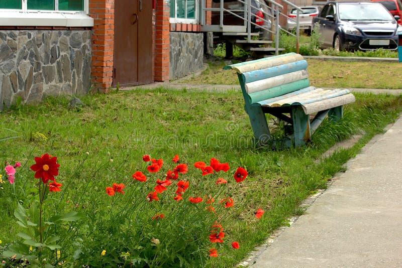 在入口前面的红色鸦片一个老长木凳 免版税库存照片